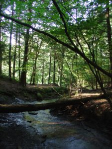 A forest canopy can help reduce stream temperatures.